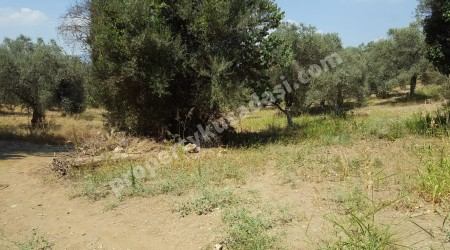 1000 sqm Private Land to Build a Detached Villa Close to Shopping Malls in Kusadasi